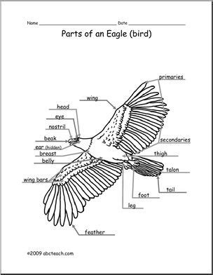 animal diagram eagle labeled  unlabeled abcteach