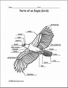animal diagram eagle labeled and unlabeled abcteach With bald eagle diagram