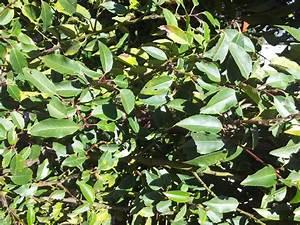 Stockrosen Blätter Haben Löcher : fra spuren l cher in bl tter von portugiesischem ~ Lizthompson.info Haus und Dekorationen
