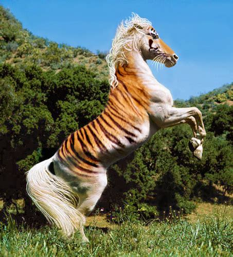photoshop horse horses tigers incredible tiger zebra mix hybrid animals photoshopped animal rare cool hybrids breed extremely rarest equine freakingnews
