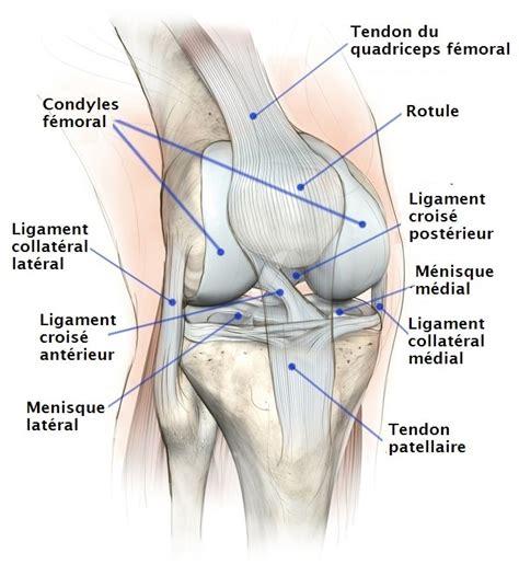 mal interieur cuisse gauche fissure du m 233 nisque du genou interne externe et grade