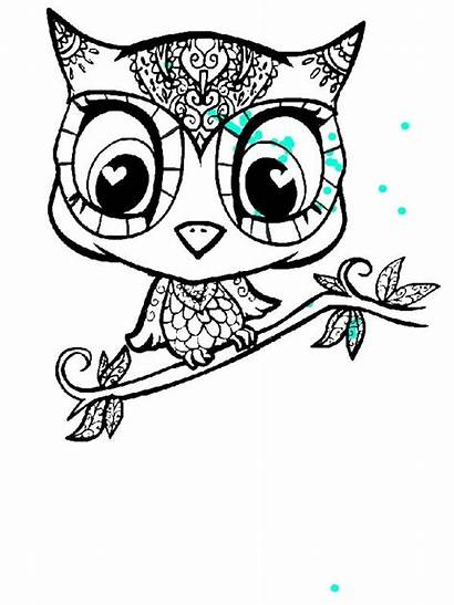 Olds Coloring Pages Owl Cartoon Drawing Character