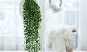 Hängesessel Fürs Zimmer : h ngepflanzen f rs zimmer groupon ~ Orissabook.com Haus und Dekorationen