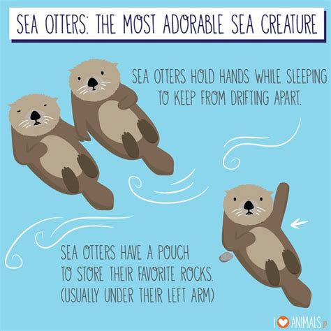 Sea Otter Meme - 25 best ideas about otter meme on pinterest animal puns otters and stupid memes