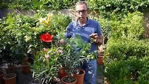 Mediterrane Pflanzen Liste : mediterrane pflanzen youtube ~ Watch28wear.com Haus und Dekorationen