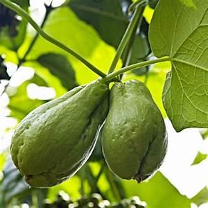Treillage Plante Grimpante : plante grimpante liste ooreka ~ Dode.kayakingforconservation.com Idées de Décoration