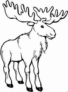 Elch Vorlage Kostenlos : elch mit grossem geweih ausmalbild malvorlage tiere ~ Lizthompson.info Haus und Dekorationen