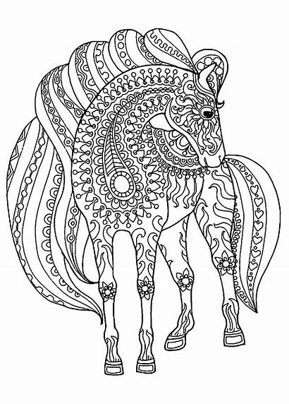 Coloring Horse Pages Adults Printable