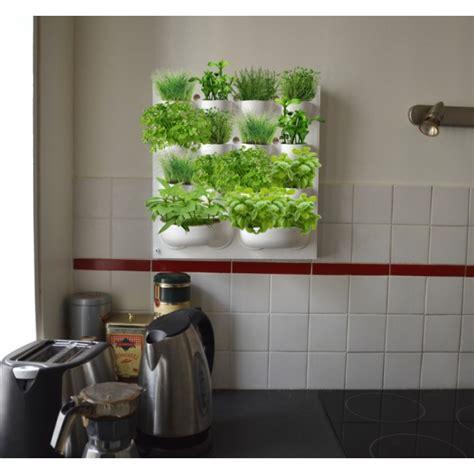plantes aromatiques cuisine cultiver ses plantes aromatiques en intérieur couteaux