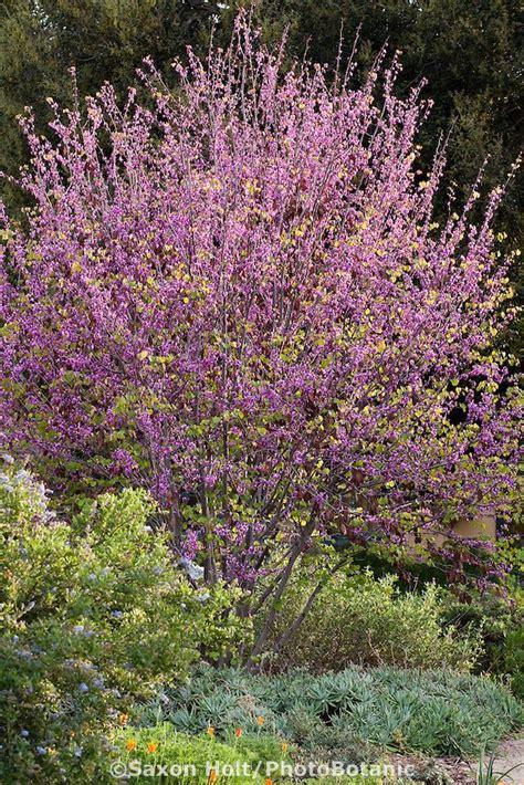 southern california plants 40 best images about california native plants ojai on pinterest manzanita gardens and sun