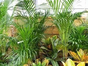 Plante D Intérieur : plantes d 39 int rieur en hiver jardiner avec jean paul ~ Dode.kayakingforconservation.com Idées de Décoration