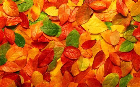 Résultat d'images pour automne