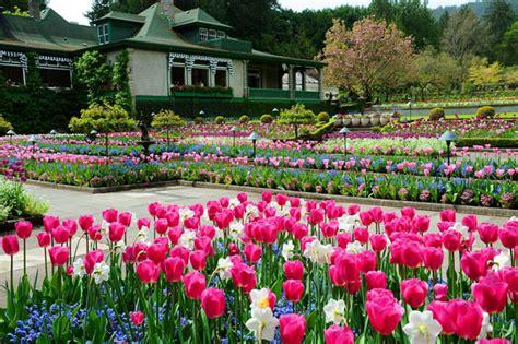 garden fiori e piante l incanto di fiori e piante ai giardini butchart