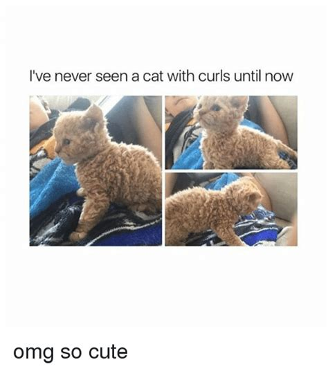 25+ Best Memes About Omg So Cute  Omg So Cute Memes