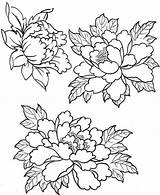 Patterns Embroidery Peony Coloring Peonies Flower Pages Drawings Designs Tattoo Painting пионов Tracing Fabric Print рисунки Drawing Flowers Silk Floral sketch template