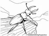 Coloring Pages Realistic Insect Beetle Titan Posted sketch template