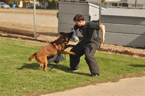 Police Dog Training  Royal Dog Academy. Business Intelligence Applications Examples. Nissan Dealers In Charlotte Nc. Crimp On Bnc Connector I Want To Adopt A Baby. Student Loan Repayment Rules. Symantec Backup Exec Agent For Windows. Online Teaching Degrees Ohio 529 Tax Rules. Michigan Bar Member Directory. Portland Oregon Carpet Cleaning