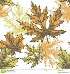 Seamless Wallpaper With A Maple Leaf, Hand-drawing Royalty ...