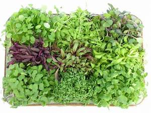What Are The Health Benefits Of Microgreens Urban Cultivator