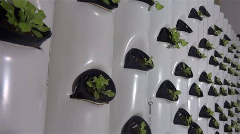 high density vertical hydroponics youtube