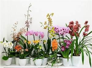 Comment Soigner Une Orchidée : orchid es vari t s entretien floraison rempotage ~ Farleysfitness.com Idées de Décoration