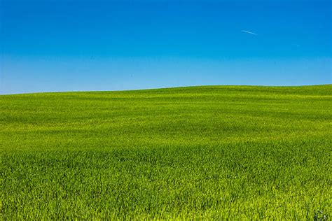 Best Grassy Field Stock Photos, Pictures & Royalty-free