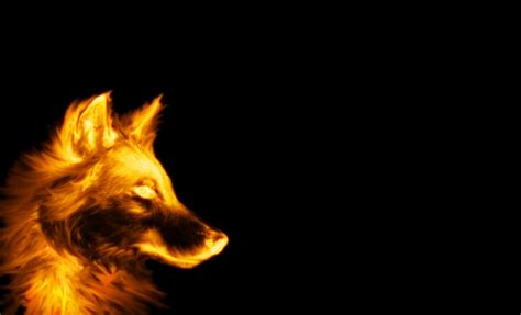 Cool Animal Wallpapers Wolf - cool wolf picture on animal picture society