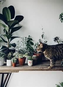 Plante Balcon Facile D Entretien : 5 plantes d 39 int rieur faciles d 39 entretien plants ~ Melissatoandfro.com Idées de Décoration