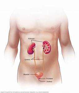 Kidney Infection - Symptoms And Causes