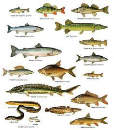 names  fish  eat     eat  types