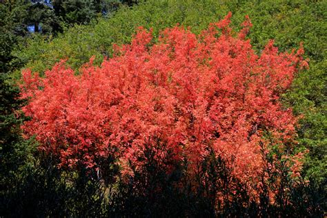 burning bush burning bush quotes quotesgram