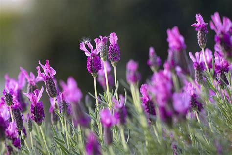 pflanzen gegen ameisen garten n 252 tzlinge mit bl 252 tenpflanzen f 246 rdern bauherren immobilien magazin