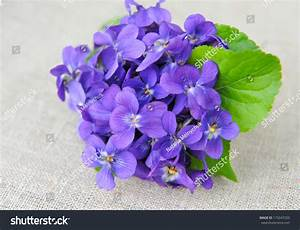 Bouquet Violets Flowers Viola Odorata On Stock Photo ...