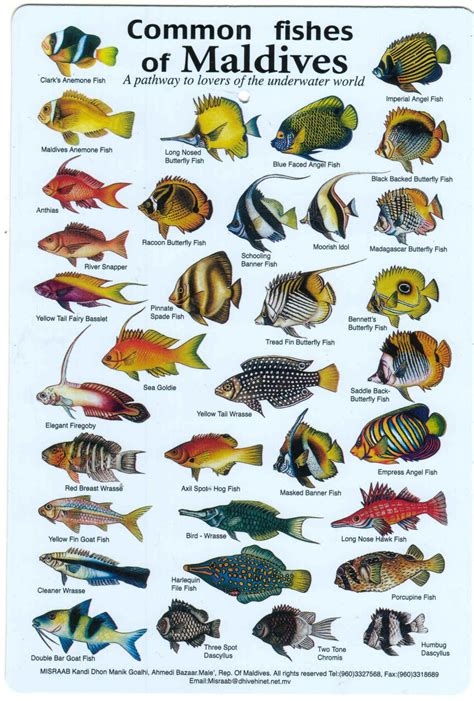common fish  maldives fish fish marine fish fish chart