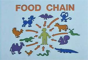 The Simpsons Was Wrong: Humans Are Kinda Low in the Food Chain