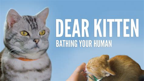 Dear Kitten Bathing Your Human Youtube