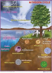 Enviromental Science  U0026 Science Charts