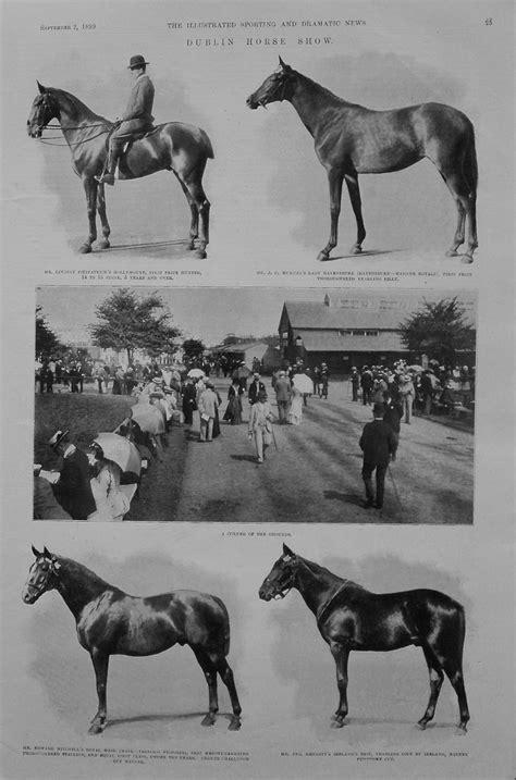 dublin horse