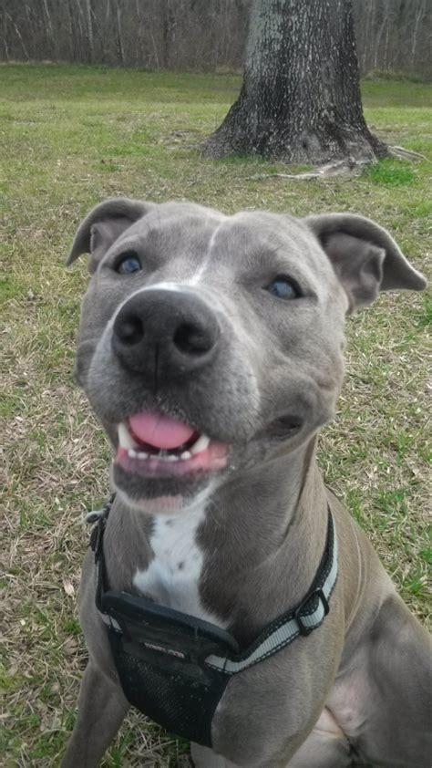 smiling dogs modern dog magazine