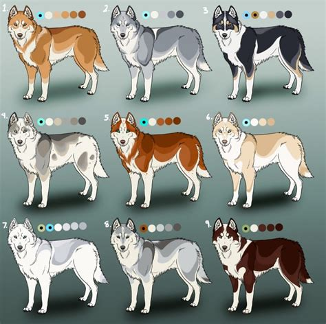 husky coat colors siberian coat colours windshot