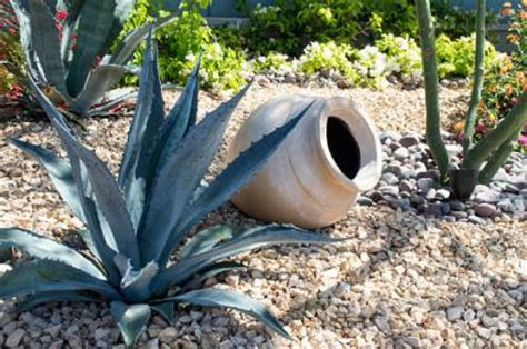 landscaping garden design  succulents lovetoknow