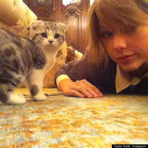 taylor swift shows   kitten meredith photo huffpost