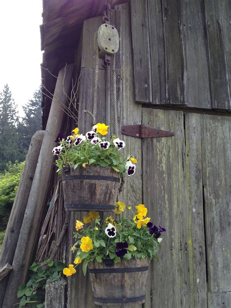 Hanging Buckets Pansies Old Pulley Campbell