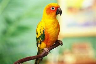 bathroom diy ideas interesting facts about sun conures