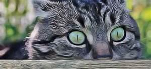 Repulsif Pour Urine Chat : urine de chat les plantes r pulsives conseils et id es ~ Melissatoandfro.com Idées de Décoration