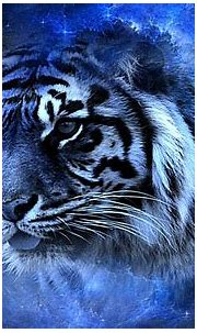 Tiger in Blue HD Wallpaper | Background Image | 1920x1200