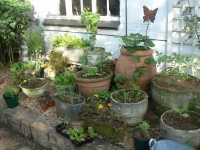 kitchen herb garden ideas my new potted kitchen garden herbs vegies sprig
