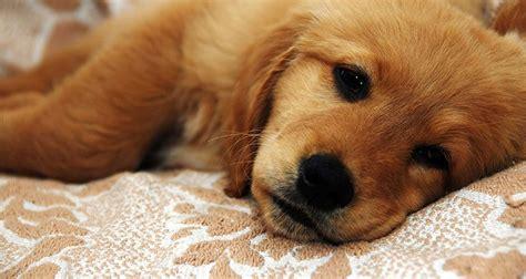 diarrhea in dogs diarrhea in dogs cesar s way
