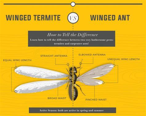 rid  rid  termite swarmers wwwe bedbugs