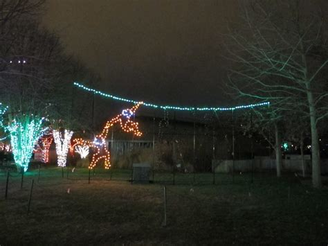 collection st louis zoo lights pictures best